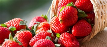 2020210 Strawberry Festival at Peddlers Village