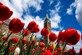 2021099 Canadian Tulip Festival