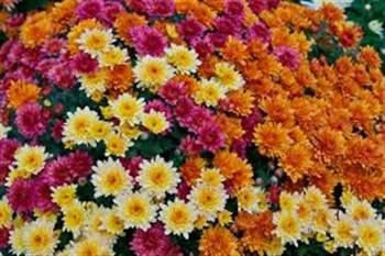 2021033 Philadelphia Flower Show & Bloomin' Brunch