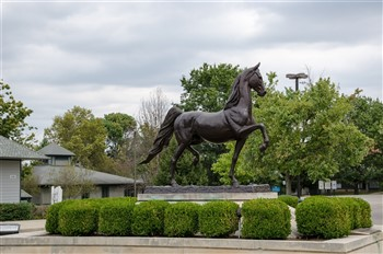2022035 Kentucky Bluegrass & Noah's Ark