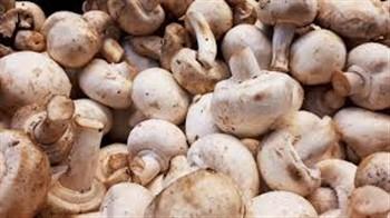 2021146 Mushroom Festival in Kennett Square, Pa.